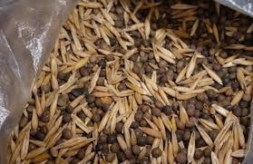 Семена Вика овес, 1 кг
