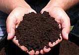 Почва для голубики Киев Грунт для посадки голубики продажа Киев. Торф кислый., фото 8