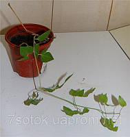 Горшок рассадный (рассадник),терракот, 80х60