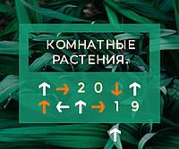 Комнатные растения, которые привлекают удачу в 2019 году