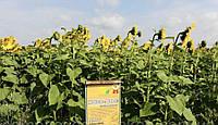 Семена подсолнечника Ново-Алье.Устойчевый к Евролайтингу на генетическом уровне .