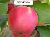 Делькорф саженцы яблони и другие саженцы плодовых
