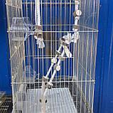 ЗОЛОТА Клітка для папуги 46*36*71см, фото 3
