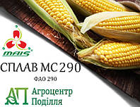 Семена кукурузы СПЛАВ МС 290 (ФАО 290) MAIS (бесплатная доставка от 10 п.о.!!!)