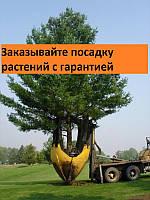 Посадка, пересадка растений, посадка и подбор крупномеров по Киеву