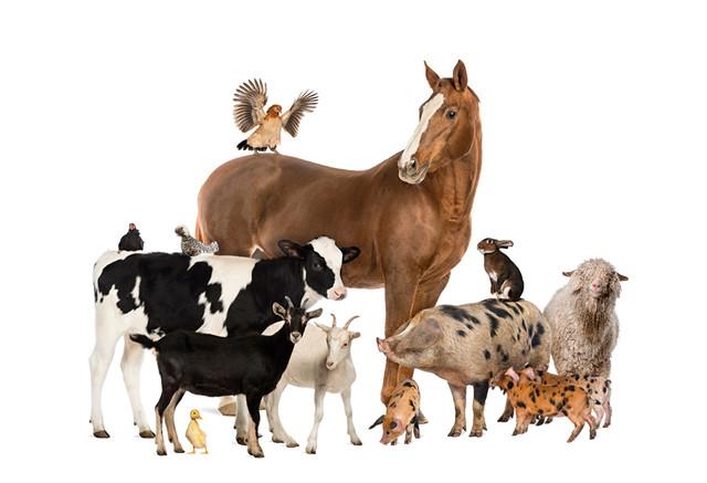 Корми, премікси, сорбенти і підкислювачі для сільськогосподарських тварин