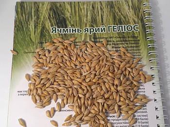 Сорт ярового ячменя Гелиос улучшеный Вакула. Среднеранний ячмень Гелиос высокоурожайный 55-60 ц/га. Элита