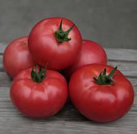Семена томата Кибо F1 (500 с) высокорослый ранний розовый