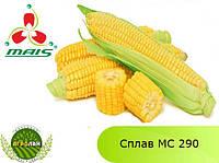 Гибрид Сплав МС 290 семена кукурузы МАИС (Днепр)