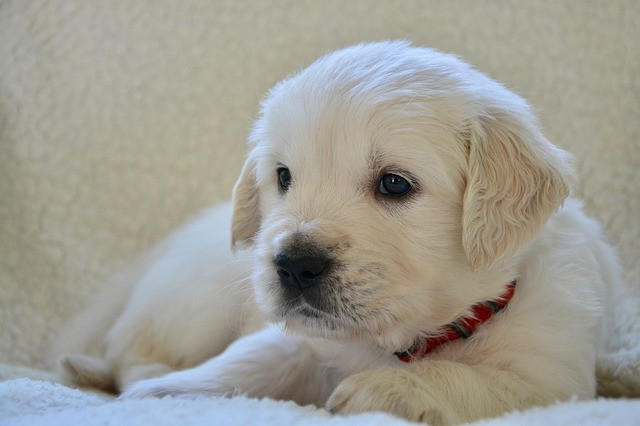 Консервы для собак Animonda • Анимонда