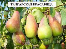 Талгарская Красавица