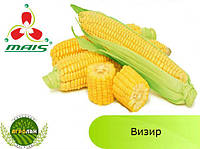 Гибрид Визир ФАО 350 семена кукурузы МАИС (Днепр)