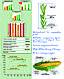 Семена кукурузы ДМ ВИКТОРИЯ (ФАО 290) MAIS, фото 2