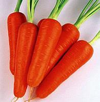 Семена моркови Шантане Курода (Semences), 500 гр., банка