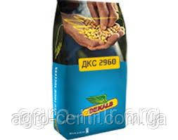 Семена кукурузы ДКС 2960 ФАО 250 Монсанто