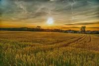 Поддержка сельского хозяйства