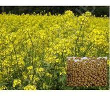 Насіння гірчиці жовтої 1 кг, Україна