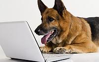 Сухой корм для взрослых собак отдельных пород