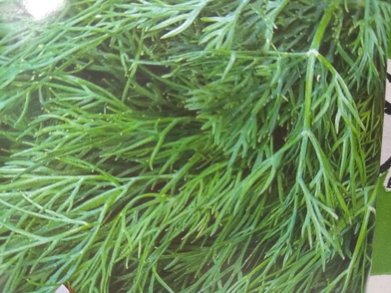 Укроп кустовой Амброзия 1 кг