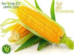 Насіння кукурудзи Біг Стар ФАО 220