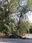 Признаки опасности деревьев.