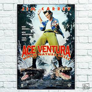 Постер Ace Ventura: Pet Detective (1994), Эйс Вентура, Джим Кэрри. Размер 60x42см (A2). Глянцевая бумага