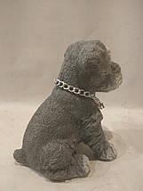 Статуетка (копилка) щеня Шнауцера кольоровий, фото 2
