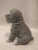 Статуэтка (копилка) щенок Шнауцера цветной, фото 3