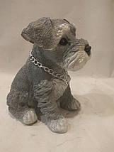 Статуэтка (копилка) щенок Шнауцера цветной, фото 2