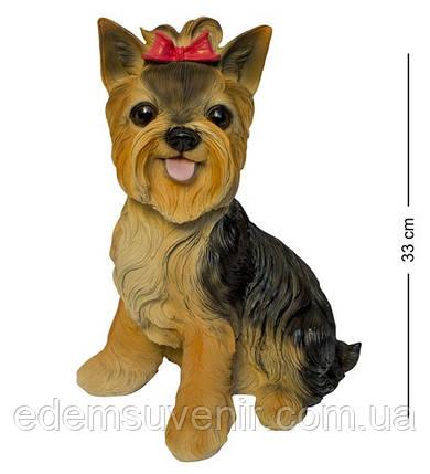 Статуэтка (копилка) собака Йоркширский терьер большой цветной, фото 2