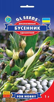 Бусенник декоративный, пакет 1г - Семена зелени и пряностей, фото 2