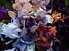 Карликовые ирисы (SDB, MDB) в нашем саду