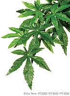 Растение шелковое ExoTerra ABULITON большое