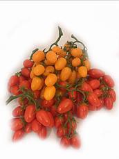 Муляж помидора.Веточка помидора Черри ., фото 2