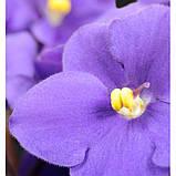 HARPINA жіночі парфуми Yodeyma 15 мл, фото 2