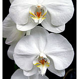 HARPINA жіночі парфуми Yodeyma 15 мл, фото 3
