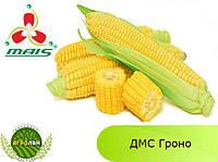 Гибрид ДМС Гроно ФАО 260 семена кукурузы МАИС (Днепр)