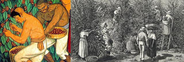 история кофе арабика Бразилия Сантос, откуда и когда в Бразилии взялся кофе