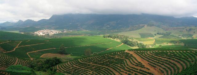выращивание арабики Бразилия Сантос, спецификация кофе