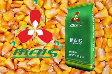 """Семена кукурузы """"Компании МАИС"""" г. Синельниково, Днепропетровской области"""