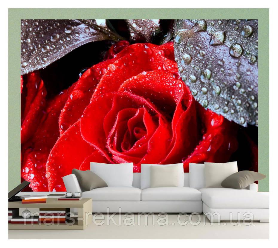 3D фотообои, цветы «Капли на розах», бумага, винил, флизелин