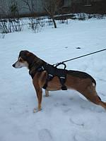 Модель зовут Надежда. Вес почти 10 кг. Собака с тяжёлой судьбой. Знающая не по наслышке, что такое обстрел, ранения и пули в животе. Она очень боится громких звуков, поэтому я и искала для неё такую шлею с которой бы она не смогла вылезти и убежать.