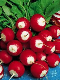 Редис красный с белым кончиком, 1 кг Польша
