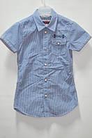 Рубашка голубая 24 мес (М)