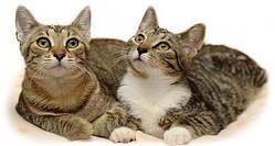 Royal Canin корм для взрослых и стареющих котов и кошек