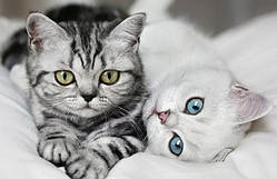 Royal Canin корм для котят и беременных кошек