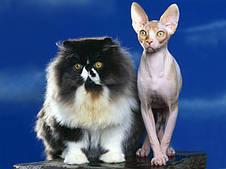 Royal Canin корм для взрослых породистых котов и кошек