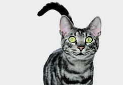 Royal Canin корм для стерилизованных кошек и кастрированных котов (взрослые, стареющие и котята)