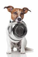 Миски для собак, банки для корма