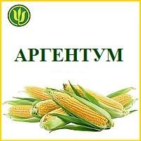 Семена Кукуруза АРГЕНТУМ ФАО 250, (Маис Черкассы)